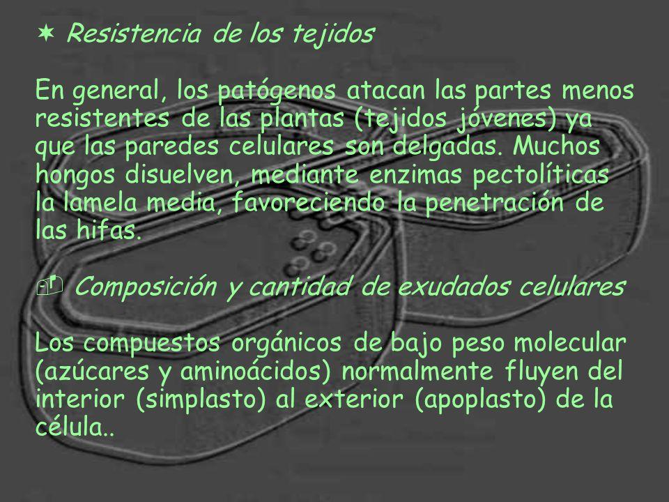 ¬ Resistencia de los tejidos En general, los patógenos atacan las partes menos resistentes de las plantas (tejidos jóvenes) ya que las paredes celular