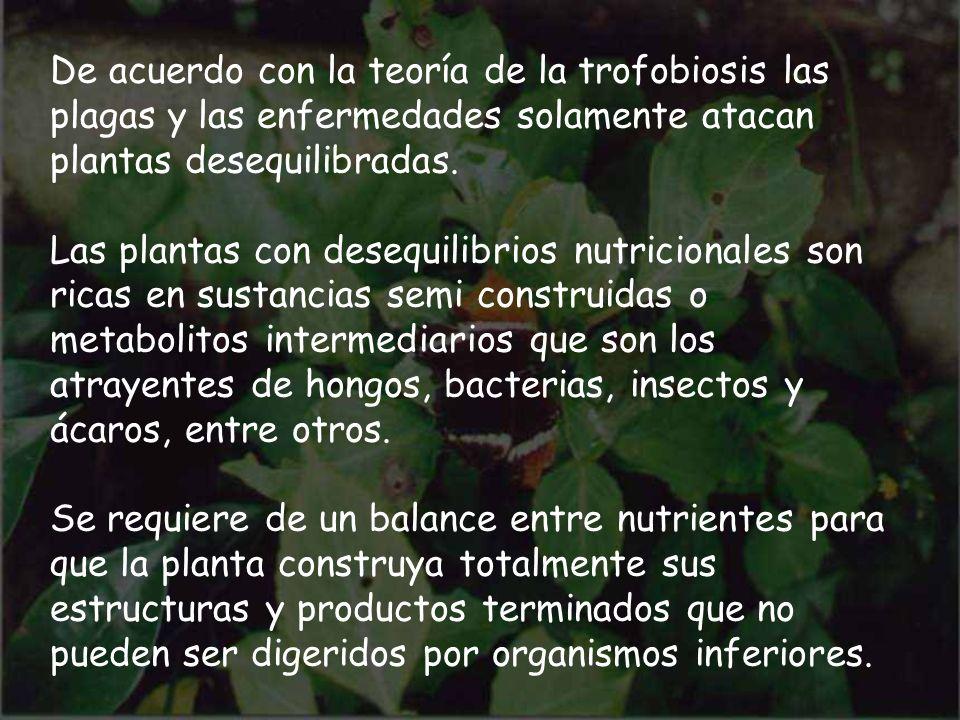 De acuerdo con la teoría de la trofobiosis las plagas y las enfermedades solamente atacan plantas desequilibradas. Las plantas con desequilibrios nutr