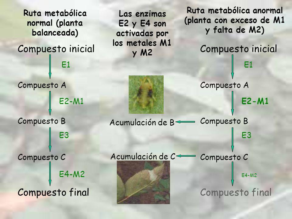 Compuesto inicial Compuesto A Compuesto B Compuesto C Compuesto final E1 E2-M1 E4-M2 E3 Ruta metabólica normal (planta balanceada) Las enzimas E2 y E4