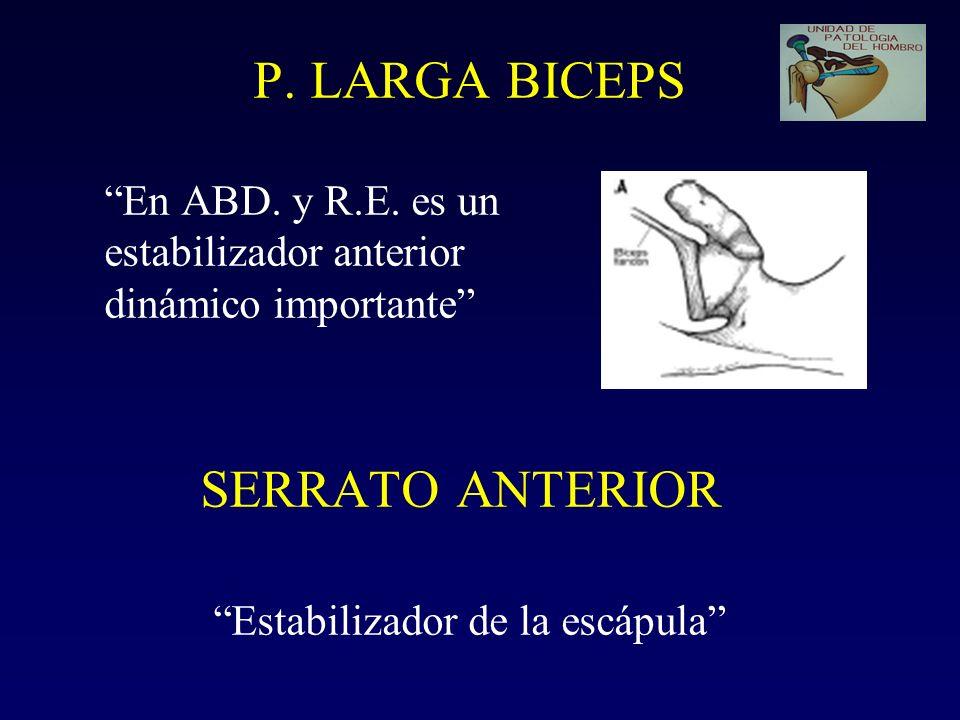 P. LARGA BICEPS En ABD. y R.E. es un estabilizador anterior dinámico importante SERRATO ANTERIOR Estabilizador de la escápula
