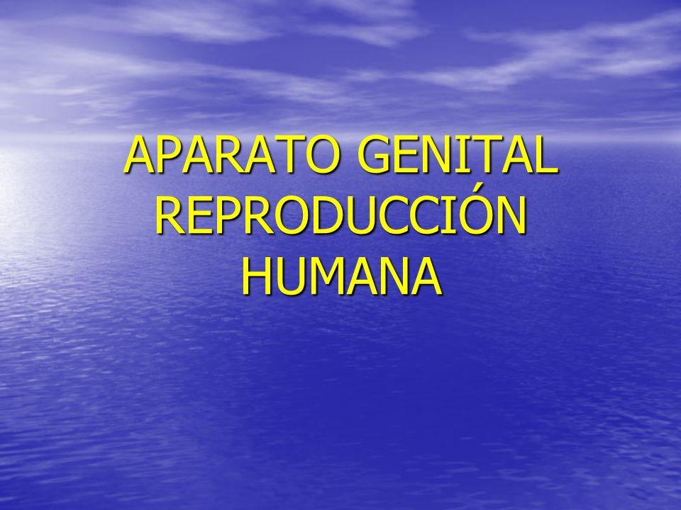 APARATO GENITAL REPRODUCCIÓN HUMANA
