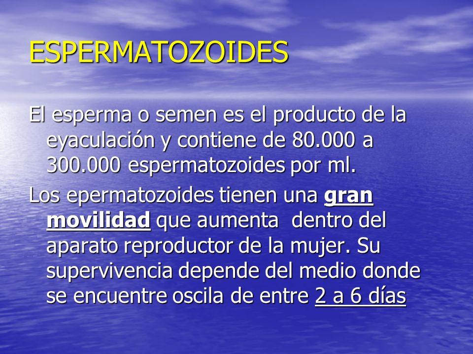 ESPERMATOZOIDES El esperma o semen es el producto de la eyaculación y contiene de 80.000 a 300.000 espermatozoides por ml. Los epermatozoides tienen u