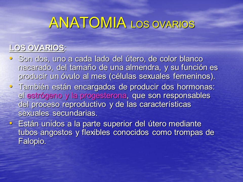ANATOMIA LOS OVARIOS LOS OVARIOS: Son dos, uno a cada lado del útero, de color blanco nacarado, del tamaño de una almendra, y su función es producir u