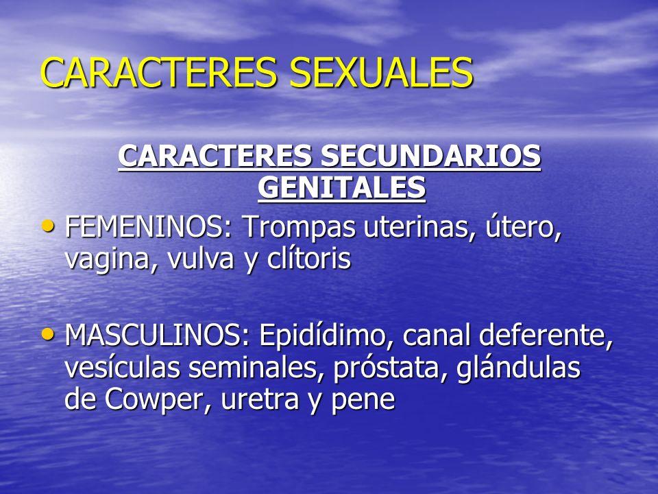 CARACTERES SEXUALES CARACTERES SECUNDARIOS GENITALES FEMENINOS: Trompas uterinas, útero, vagina, vulva y clítoris FEMENINOS: Trompas uterinas, útero,