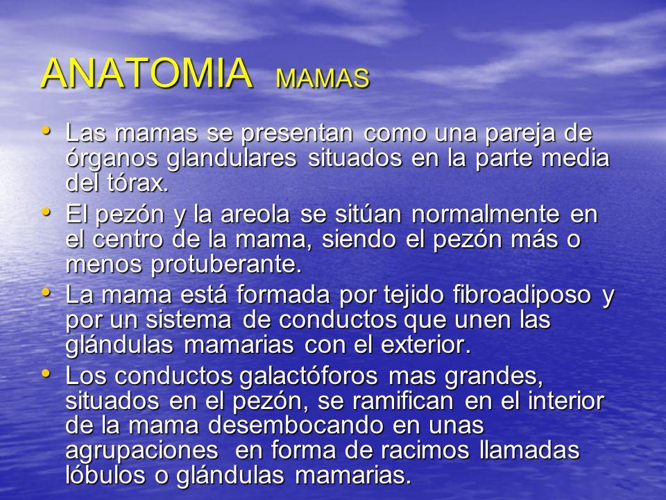 ANATOMIA MAMAS Las mamas se presentan como una pareja de órganos glandulares situados en la parte media del tórax. Las mamas se presentan como una par