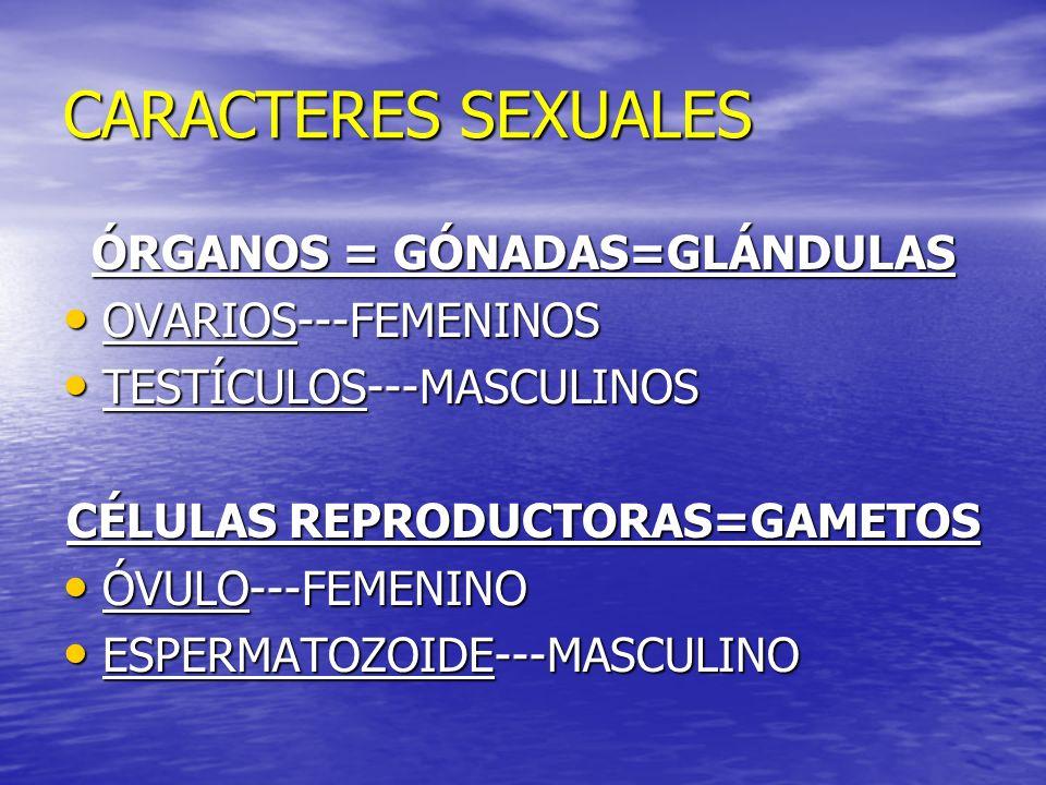 CARACTERES SEXUALES ÓRGANOS = GÓNADAS=GLÁNDULAS OVARIOS---FEMENINOS OVARIOS---FEMENINOS TESTÍCULOS---MASCULINOS TESTÍCULOS---MASCULINOS CÉLULAS REPROD