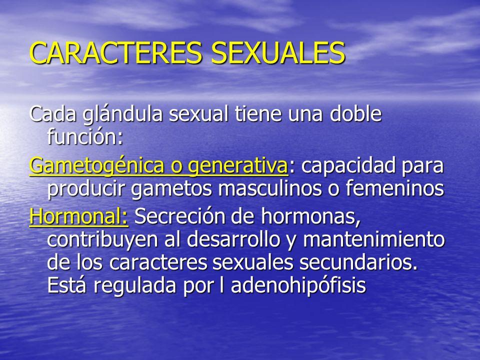 CARACTERES SEXUALES Cada glándula sexual tiene una doble función: Gametogénica o generativa: capacidad para producir gametos masculinos o femeninos Ho