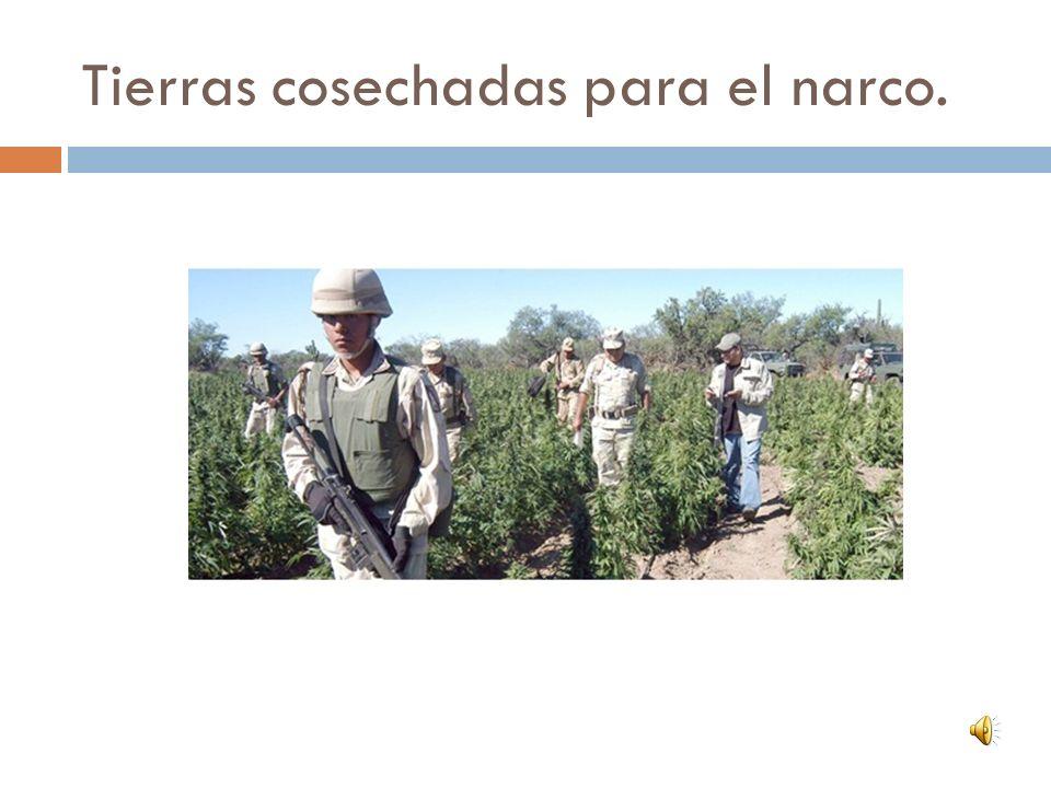 Tierras cosechadas para el narco.