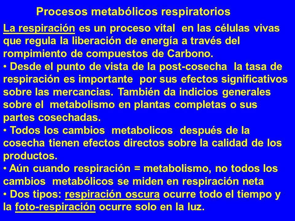 La respiración es un proceso vital en las células vivas que regula la liberación de energía a través del rompimiento de compuestos de Carbono. Desde e