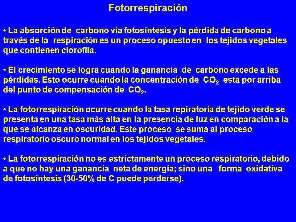 Fotorrespiración La absorción de carbono vía fotosíntesis y la pérdida de carbono a través de la respiración es un proceso opuesto en los tejidos vege