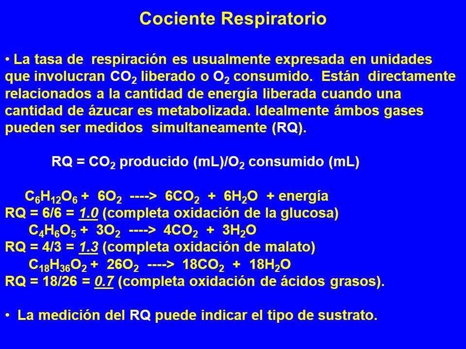 Cociente Respiratorio La tasa de respiración es usualmente expresada en unidades que involucran CO 2 liberado o O 2 consumido. Están directamente rela