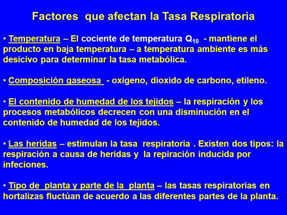 Factores que afectan la Tasa Respiratoria Temperatura – El cociente de temperatura Q 10 - mantiene el producto en baja temperatura – a temperatura amb