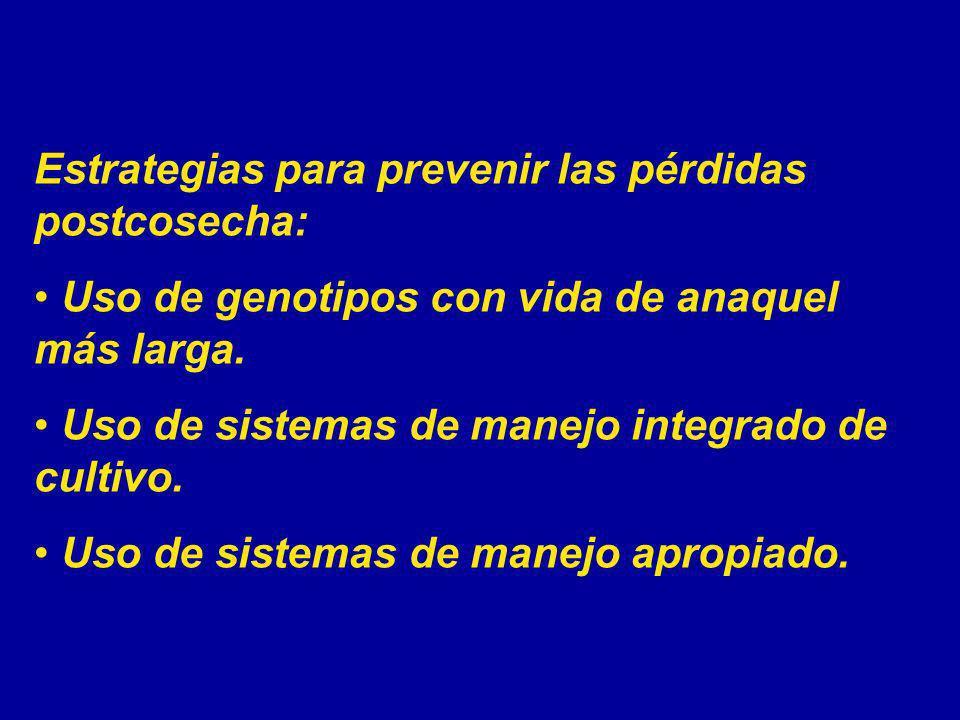 Estrategias para prevenir las pérdidas postcosecha: Uso de genotipos con vida de anaquel más larga. Uso de sistemas de manejo integrado de cultivo. Us
