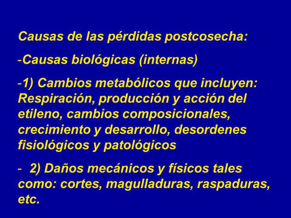Causas de las pérdidas postcosecha: -Causas biológicas (internas) -1) Cambios metabólicos que incluyen: Respiración, producción y acción del etileno,
