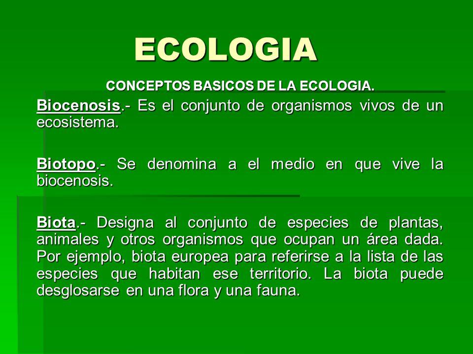 ECOLOGIA CONCEPTOS BASICOS DE LA ECOLOGIA. Biocenosis.- Es el conjunto de organismos vivos de un ecosistema. Biotopo.- Se denomina a el medio en que v