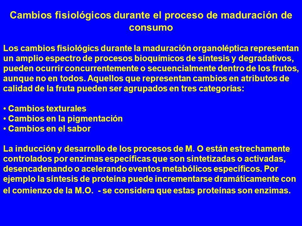 Cambios fisiológicos durante el proceso de maduración de consumo Los cambios fisiológics durante la maduración organoléptica representan un amplio esp