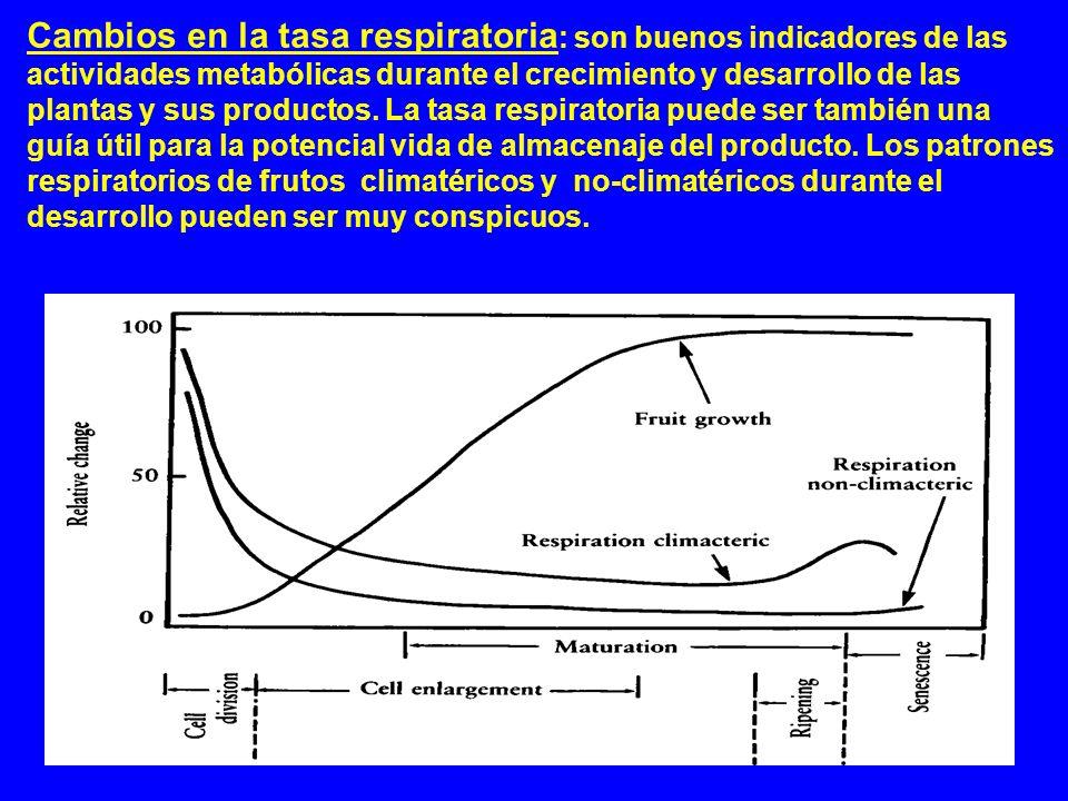 Cambios en la tasa respiratoria : son buenos indicadores de las actividades metabólicas durante el crecimiento y desarrollo de las plantas y sus produ
