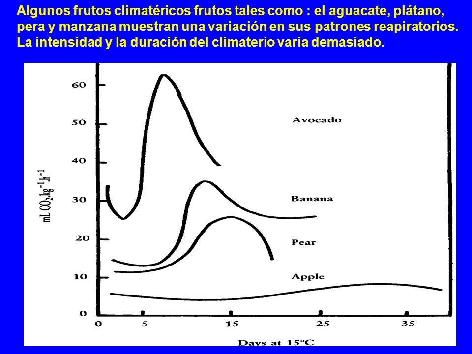 Algunos frutos climatéricos frutos tales como : el aguacate, plátano, pera y manzana muestran una variación en sus patrones reapiratorios. La intensid
