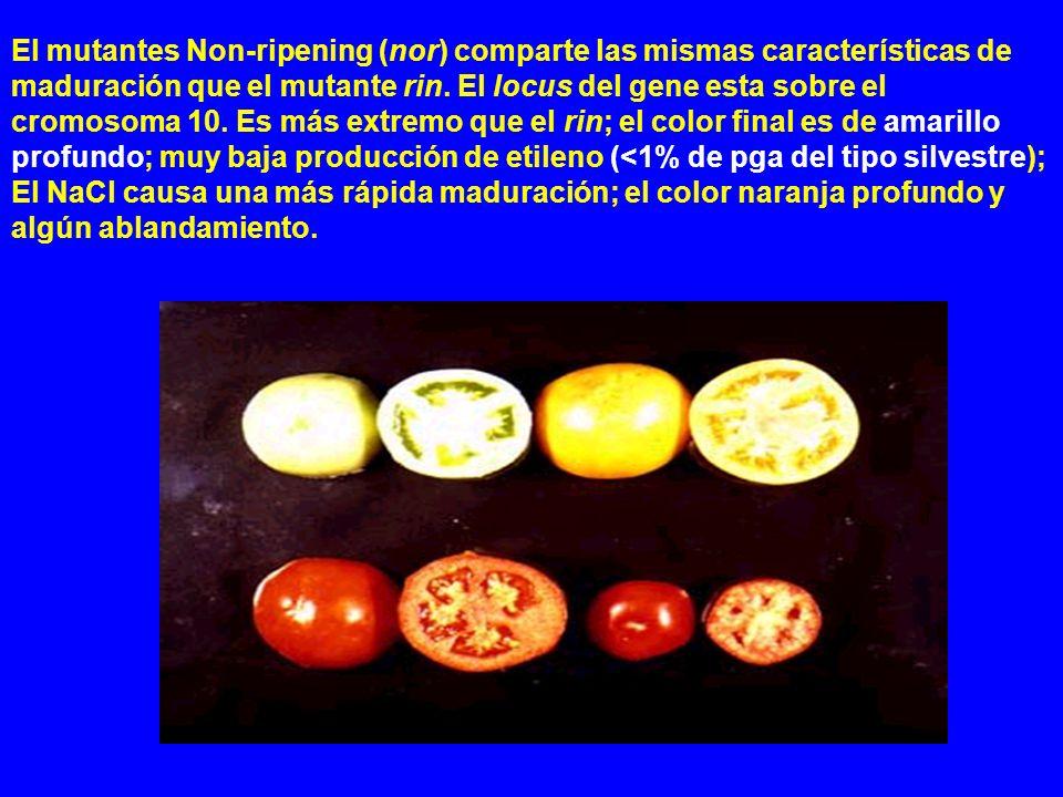El mutantes Non-ripening (nor) comparte las mismas características de maduración que el mutante rin. El locus del gene esta sobre el cromosoma 10. Es