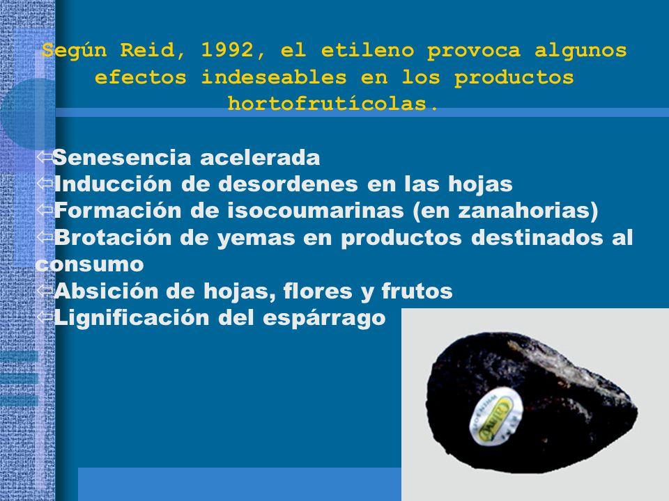 Según Reid, 1992, el etileno provoca algunos efectos indeseables en los productos hortofrutícolas. Senesencia acelerada ï Inducción de desordenes en l