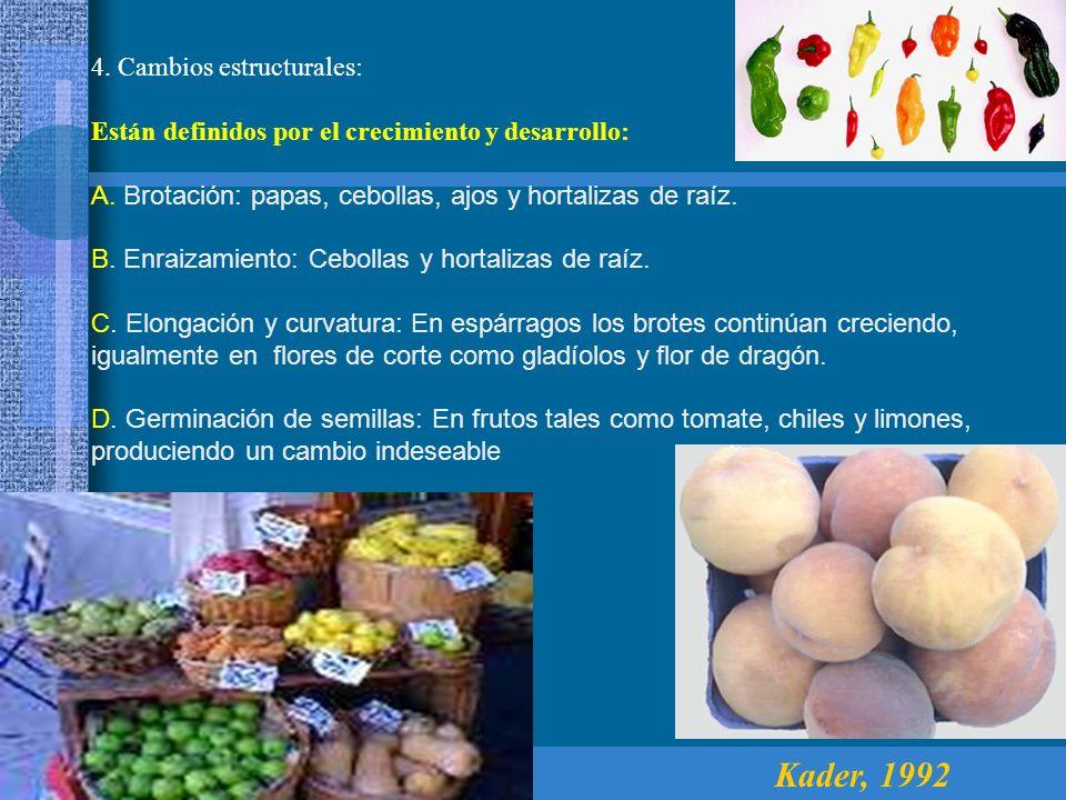 4. Cambios estructurales: Están definidos por el crecimiento y desarrollo: A. Brotación: papas, cebollas, ajos y hortalizas de raíz. B. Enraizamiento: