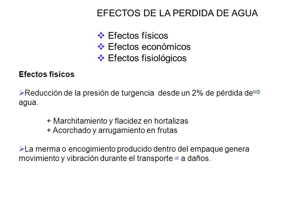 EFECTOS DE LA PERDIDA DE AGUA Efectos físicos Efectos económicos Efectos fisiológicos Efectos físicos Reducción de la presión de turgencia desde un 2% de pérdida de agua.