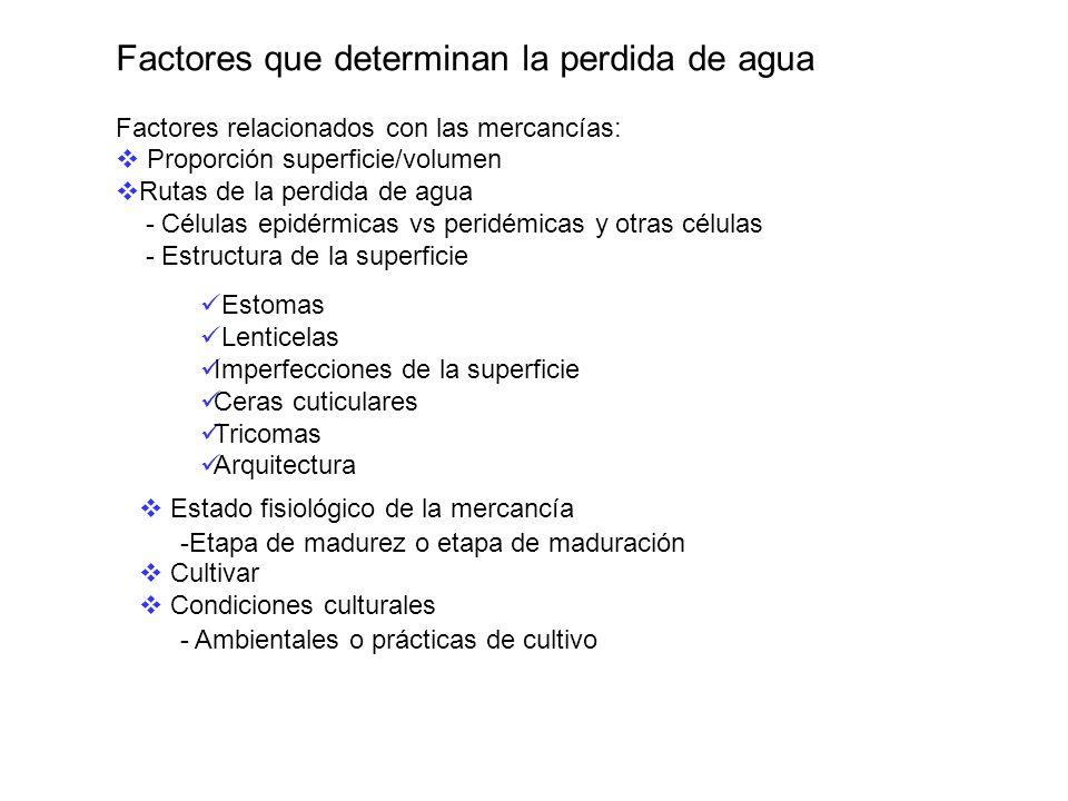 Factores que determinan la perdida de agua Factores relacionados con las mercancías: Proporción superficie/volumen Rutas de la perdida de agua - Célul