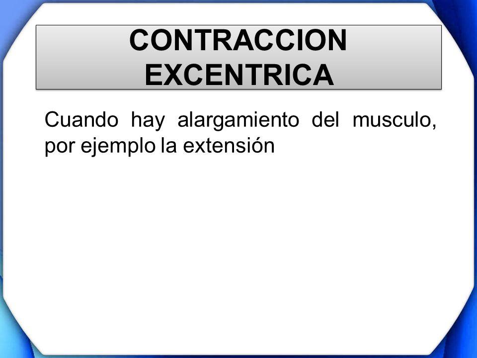 CONTRACCION EXCENTRICA Cuando hay alargamiento del musculo, por ejemplo la extensión
