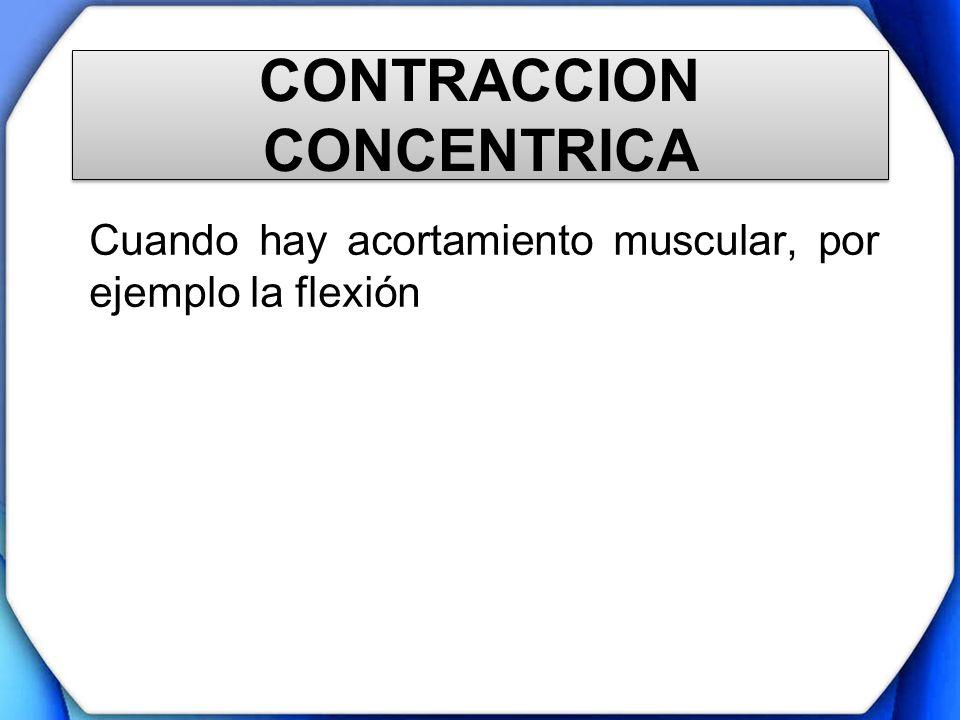 CONTRACCION CONCENTRICA Cuando hay acortamiento muscular, por ejemplo la flexión