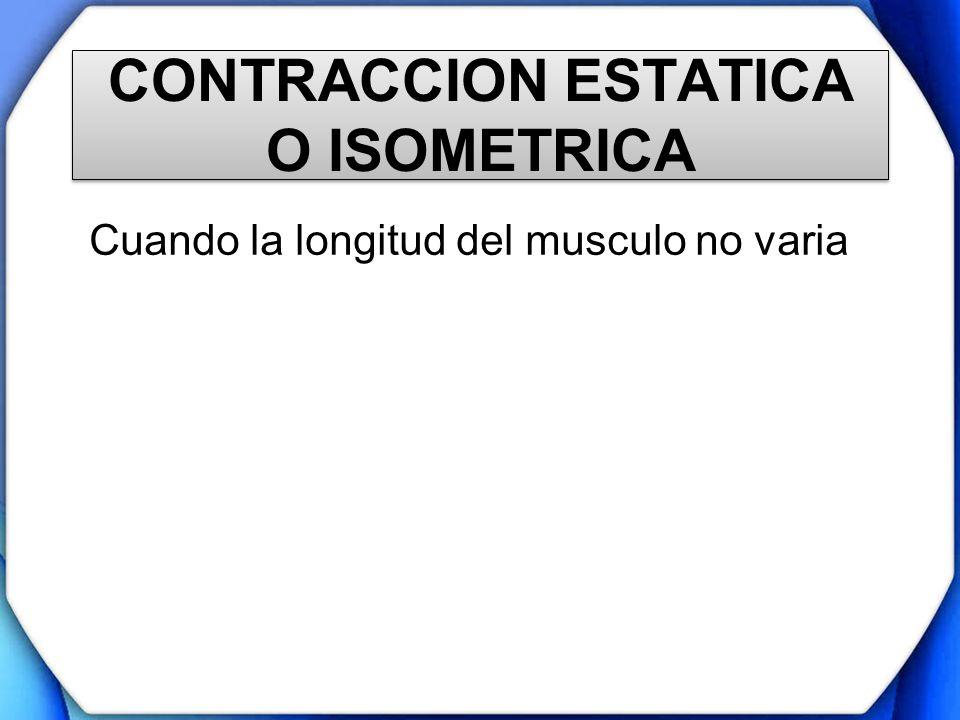 CONTRACCION ESTATICA O ISOMETRICA Cuando la longitud del musculo no varia