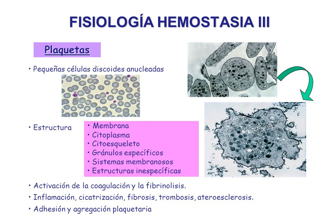 FISIOLOGÍA HEMOSTASIA III Pequeñas células discoides anucleadas Estructura Activación de la coagulación y la fibrinolisis. Inflamación, cicatrización,
