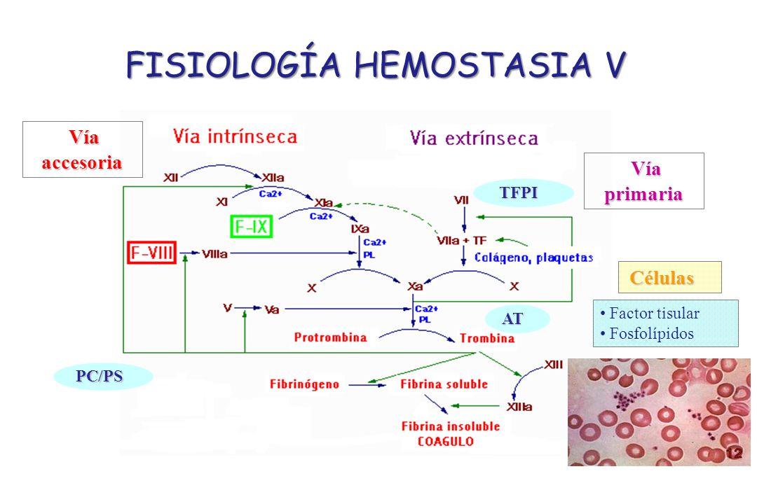 FISIOLOGÍA HEMOSTASIA V Células Factor tisular Fosfolípidos Vía primaria Vía accesoria TFPI PC/PS AT