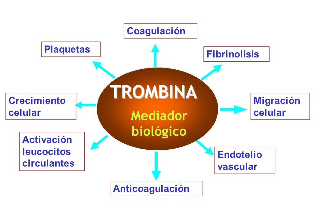 TROMBINA Mediador biológico Coagulación Fibrinolisis Plaquetas Migración celular Anticoagulación Crecimiento celular Endotelio vascular Activación leu
