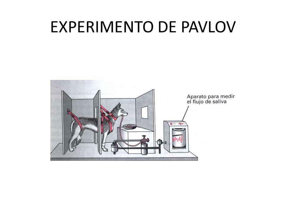 EXPERIMENTO DE PAVLOV