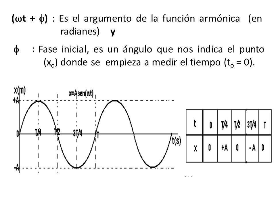 La posición de una partícula que describe un movimiento armónico simple puede ser determinada por una ecuación de movimiento La partícula describe un movimiento armónico simple POSICION DE LA PARTICULA