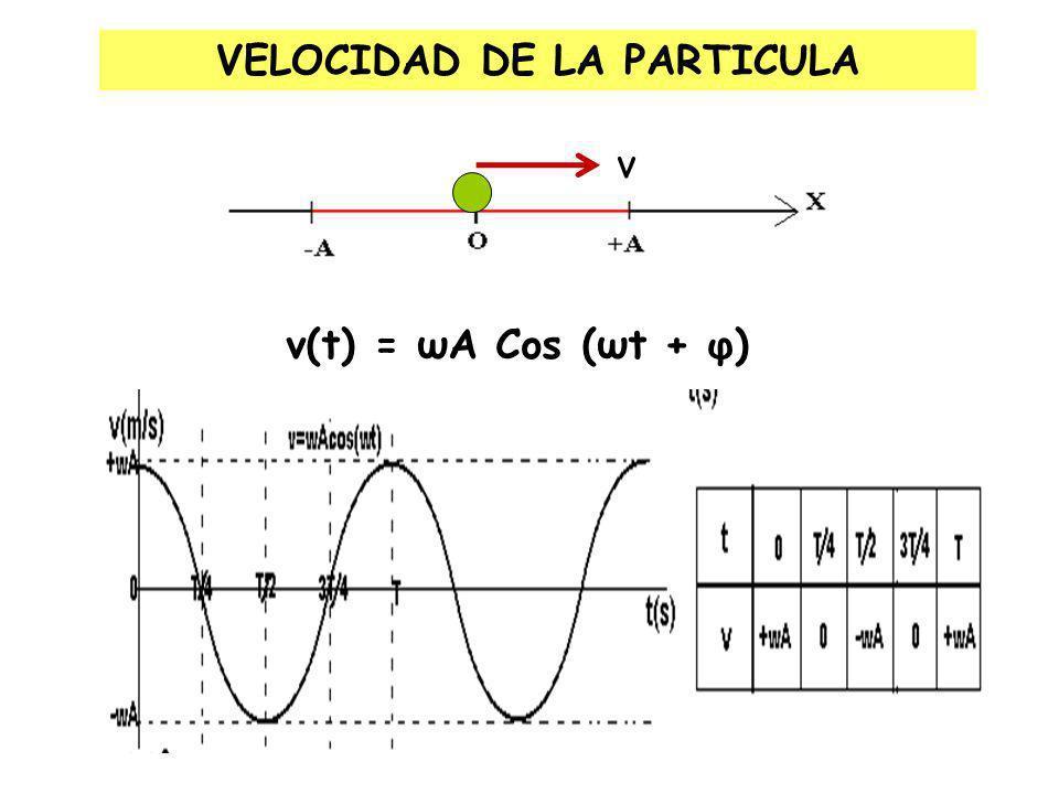 ( t + ) : Es el argumento de la función armónica (en radianes) y : Fase inicial, es un ángulo que nos indica el punto (x o ) donde se empieza a medir el tiempo (t o = 0).