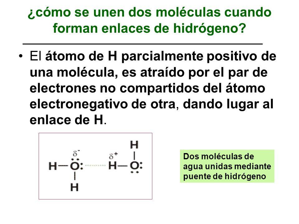¿cómo se unen dos moléculas cuando forman enlaces de hidrógeno? El átomo de H parcialmente positivo de una molécula, es atraído por el par de electron