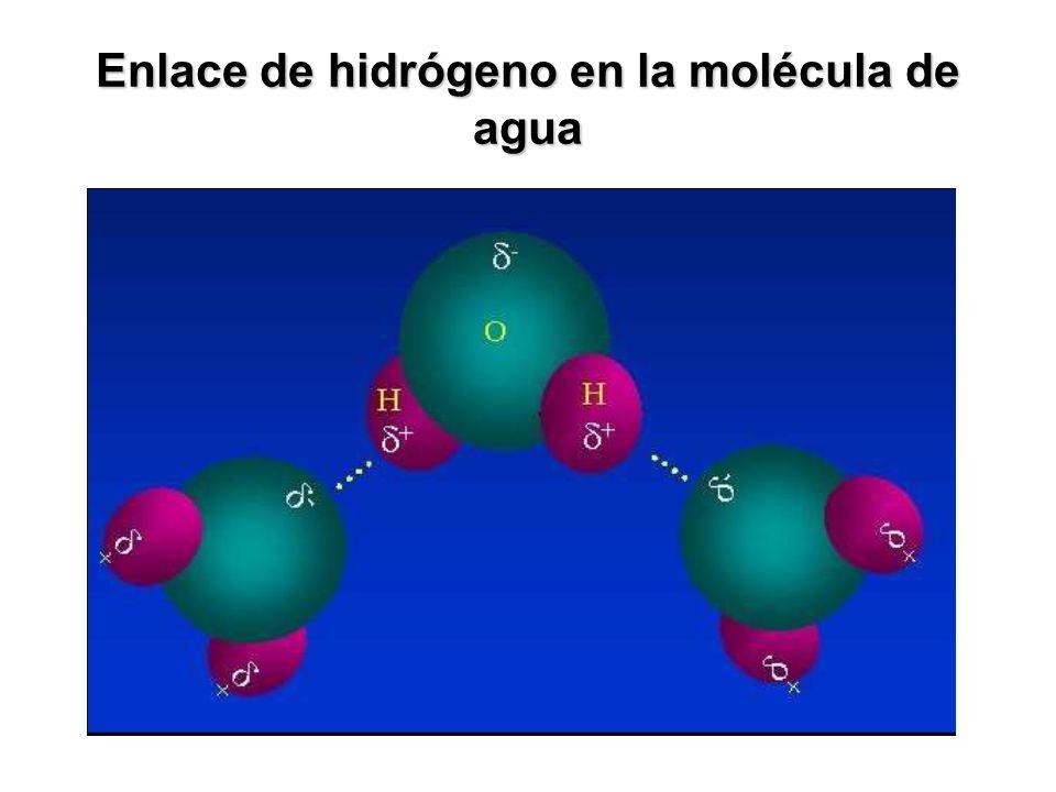 Enlace de hidrógeno en la molécula de agua