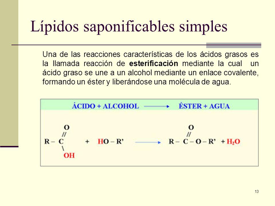 13 Lípidos saponificables simples Una de las reacciones características de los ácidos grasos es la llamada reacción de esterificación mediante la cual