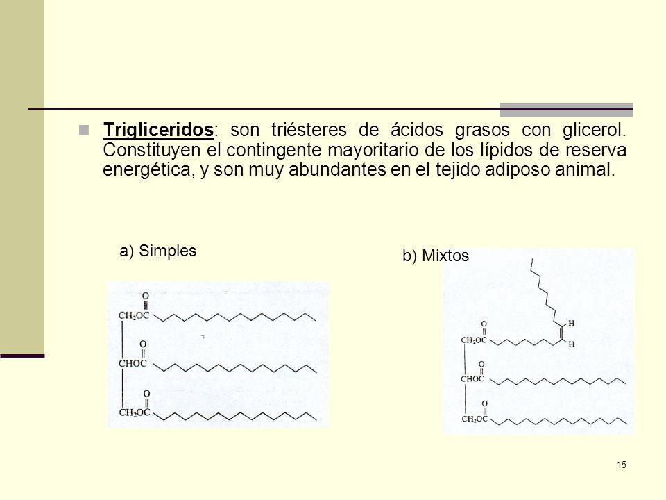 15 Trigliceridos: son triésteres de ácidos grasos con glicerol. Constituyen el contingente mayoritario de los lípidos de reserva energética, y son muy