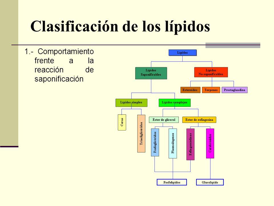 Clasificación de los lípidos 1.- Comportamiento frente a la reacción de saponificación