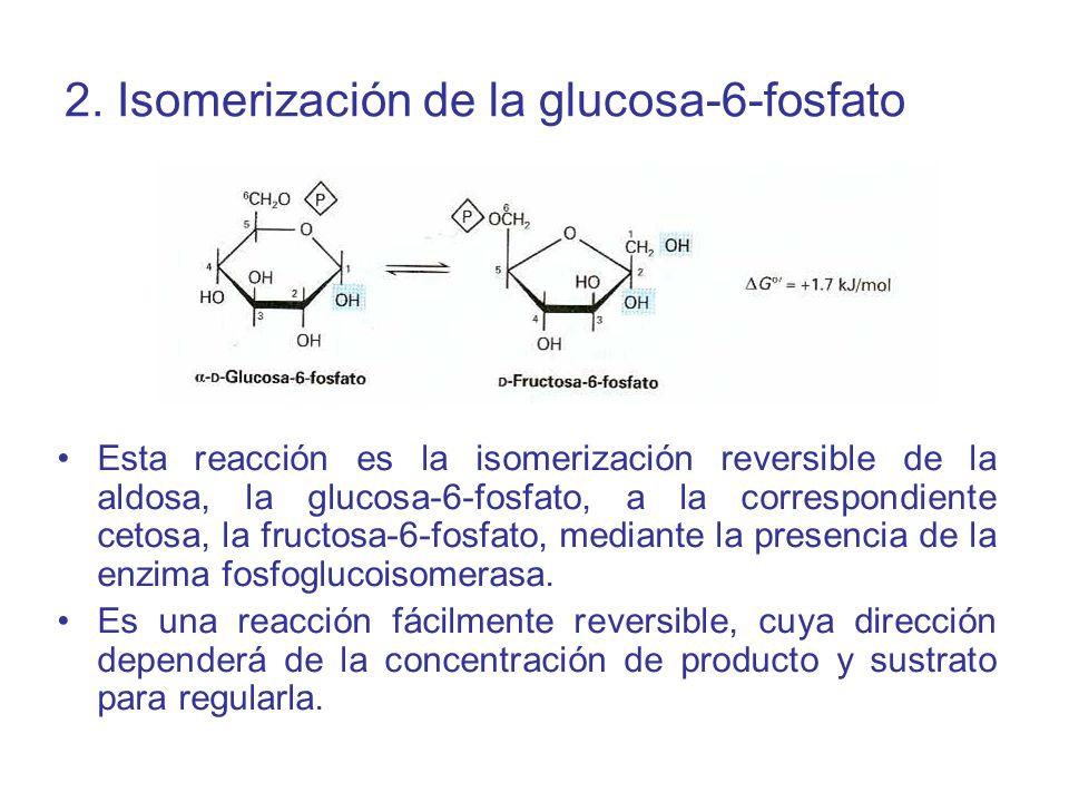 2. Isomerización de la glucosa-6-fosfato Esta reacción es la isomerización reversible de la aldosa, la glucosa-6-fosfato, a la correspondiente cetosa,