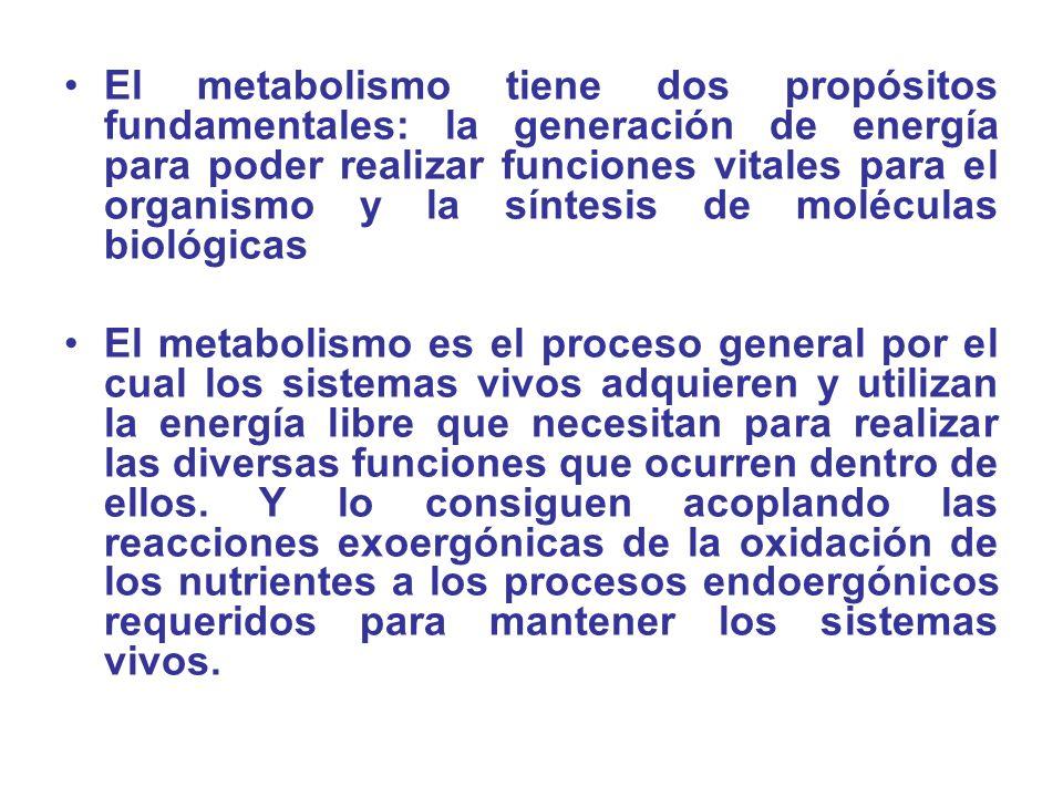 El metabolismo tiene dos propósitos fundamentales: la generación de energía para poder realizar funciones vitales para el organismo y la síntesis de m