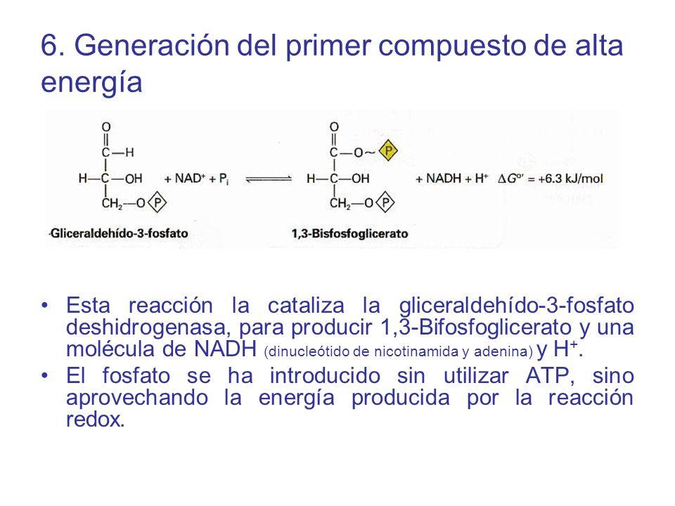 6. Generación del primer compuesto de alta energía Esta reacción la cataliza la gliceraldehído-3-fosfato deshidrogenasa, para producir 1,3-Bifosfoglic