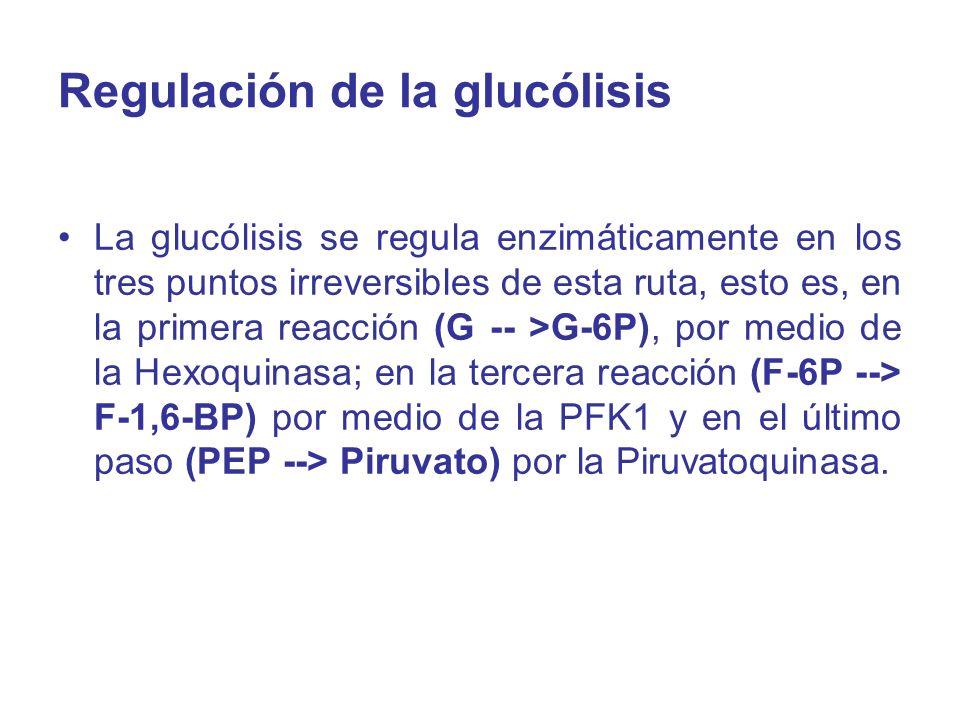 Regulación de la glucólisis La glucólisis se regula enzimáticamente en los tres puntos irreversibles de esta ruta, esto es, en la primera reacción (G
