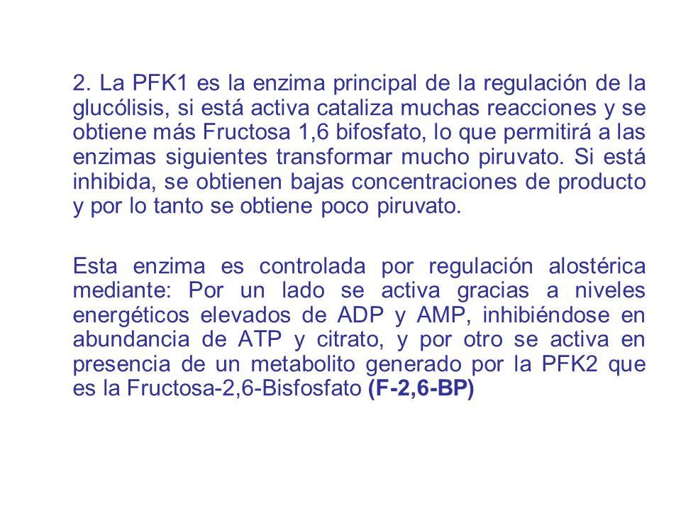 2. La PFK1 es la enzima principal de la regulación de la glucólisis, si está activa cataliza muchas reacciones y se obtiene más Fructosa 1,6 bifosfato