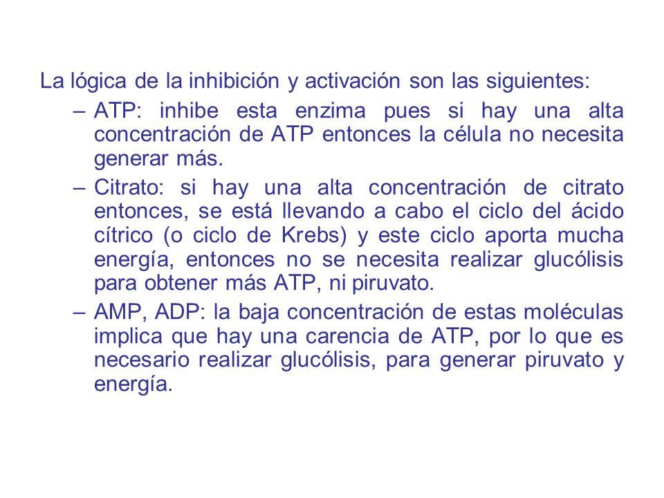 La lógica de la inhibición y activación son las siguientes: –ATP: inhibe esta enzima pues si hay una alta concentración de ATP entonces la célula no n
