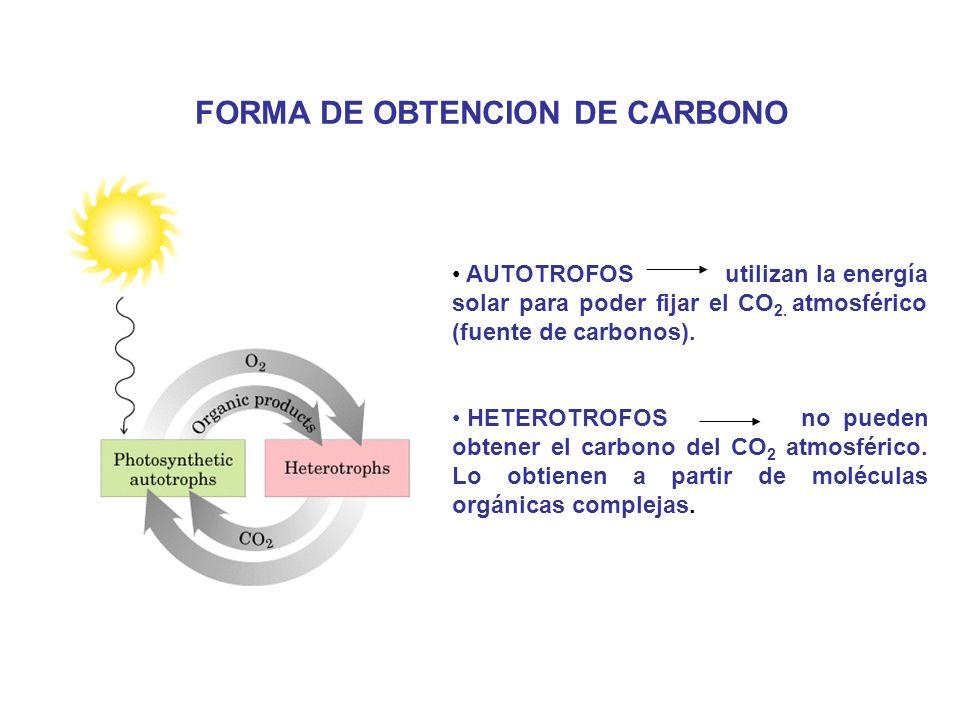 FORMA DE OBTENCION DE CARBONO AUTOTROFOS utilizan la energía solar para poder fijar el CO 2. atmosférico (fuente de carbonos). HETEROTROFOS no pueden