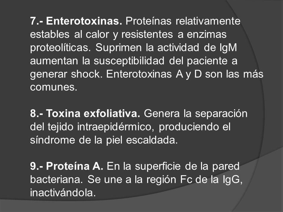 7.- Enterotoxinas. Proteínas relativamente estables al calor y resistentes a enzimas proteolíticas. Suprimen la actividad de IgM aumentan la susceptib