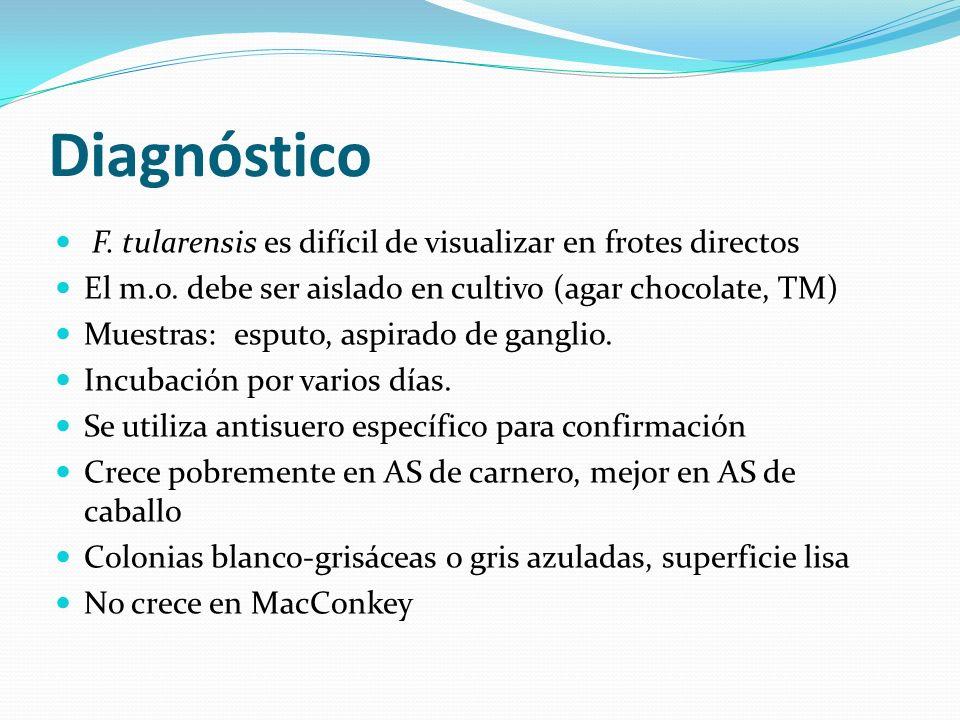 Diagnóstico F. tularensis es difícil de visualizar en frotes directos El m.o. debe ser aislado en cultivo (agar chocolate, TM) Muestras: esputo, aspir
